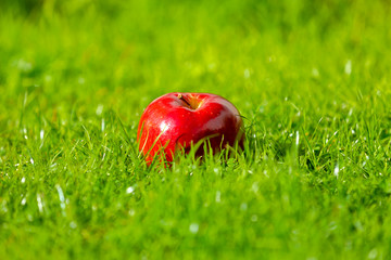 Red apple laying down on the grass on a sunny day