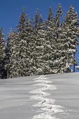 Skispur im Schnee