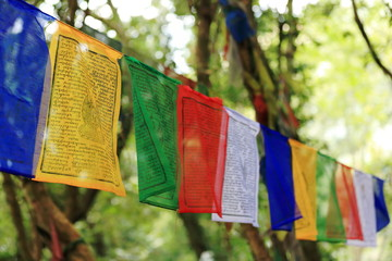 Buddhist prayer flags. T.T.Yangtse monastery-Nepal. 1006