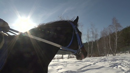 walking horseback riding on a Sunny winter day