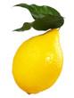 canvas print picture - Zitrone mit Blätter
