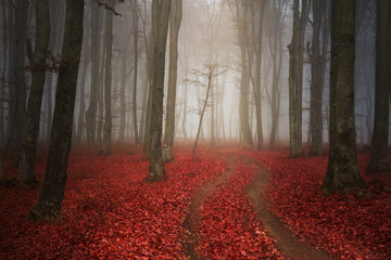 Red trail in the forest