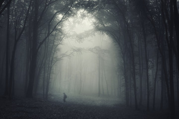 spooky shadow crawling through trees in a dark misty forest