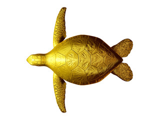 sea turtle, top view