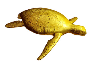 sea turtle, aerial view