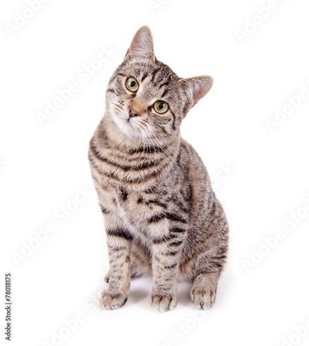 Sitzende, getigerte Katze - 78018175