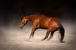 Bay horse run gallop in dark