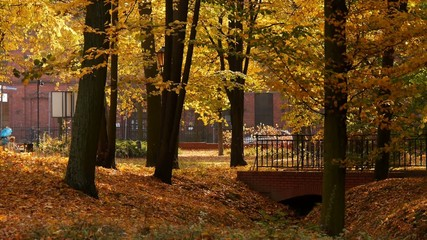 Park w mieście