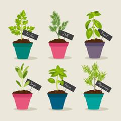 Herb garden with pots of herbs, vector illustration