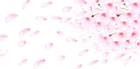 桜 花 背景