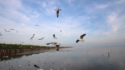 Flock of seagulls fly overhead pan left to right