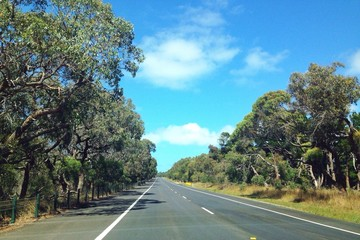 Driving between green forest in bluesky