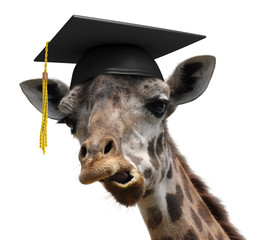 Unusual animal portrait of a goofy giraffe college graduate