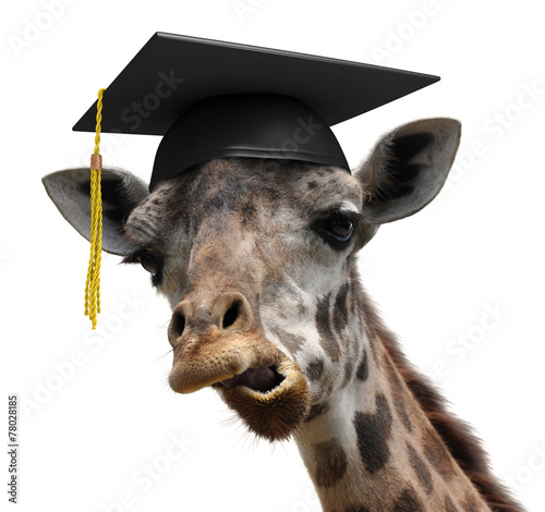 Poster Unusual animal portrait of a goofy giraffe college graduate