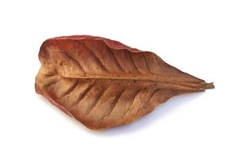 Red dry leaf