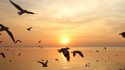 Flock of Seagulls fly over sea in sunset