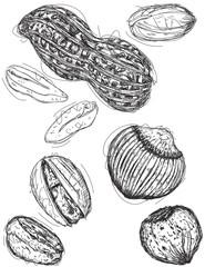 Peanut, pistachio, and chestnut sketches