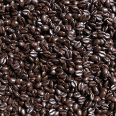 Food and drink background of roasted coffee beans arabica