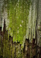 green moldy old wood