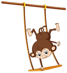Monkey and swing
