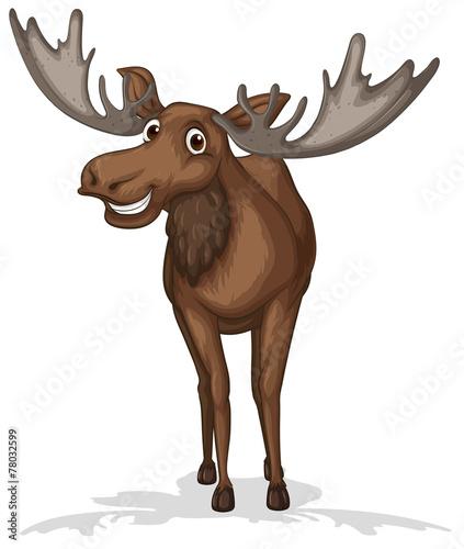 Moose. - 78032599