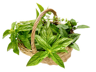 basket different varieties of basil