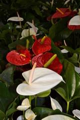 Fiore e Fiori belli