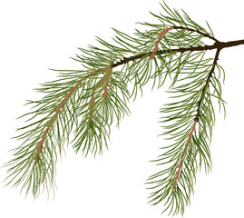green pine tree branch isolated illustration