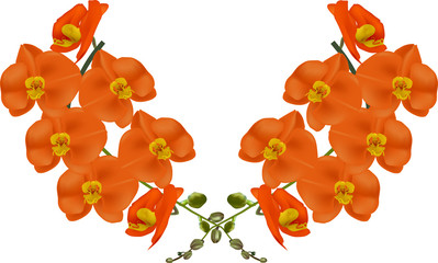 bright orange orchids isolated on white