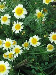 Fiore e Fiori