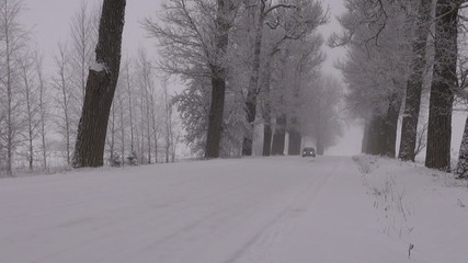 car driving on snowy old rural road with tree alley