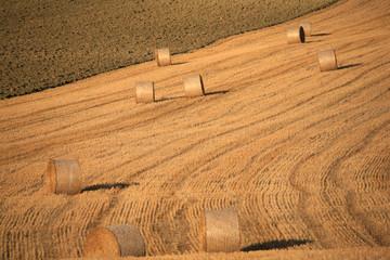 Toscana,Val d'Orcia, covoni del grano.