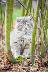 Little grey kitten sitting in the bush