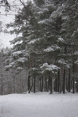 Зимный лес