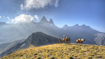 A group of horses in a meadow in front of the Aiguille d'Arves m
