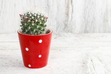 Miniature cactus in red dotted ceramic pot