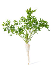 Parsley root isolated