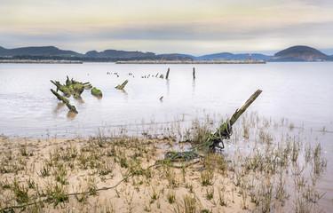 Esqueleto de barco en la playa del Regaton 03