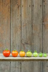 Evolution of red tomato - maturing process of the vegetable