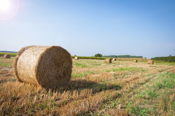 The Mown wheat and straw in a field