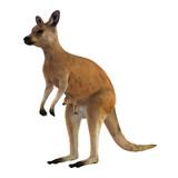Fototapety Red Kangaroo with Baby