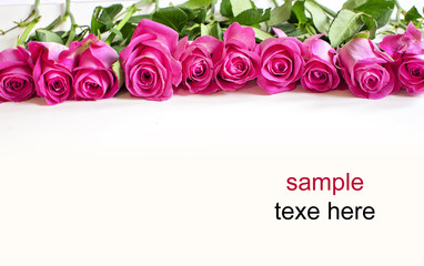 pink red rose background