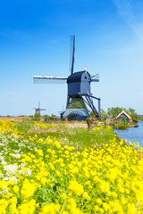 Kinderdijk watermill over spring yellow flowers