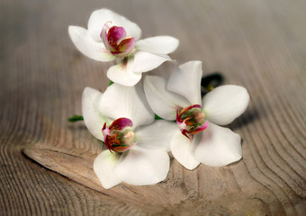 Orchid on wooden table