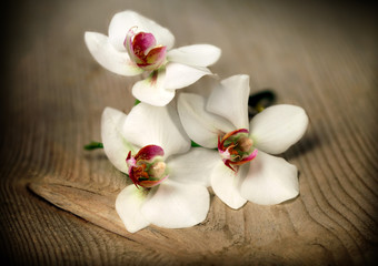 Beautiful flower Orchid in vintage style
