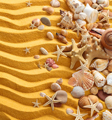 Yellow sand and seashells background.