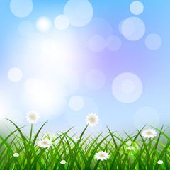 Floral background with blue sky, green grass and flowers