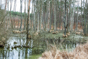 Floodplains - swamp in the forest in spring