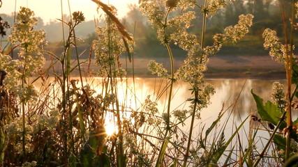 grass on riverside at dawn