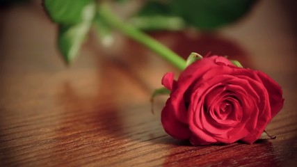 Red roses on the table